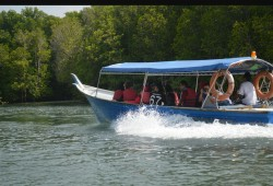Mangrove boat2